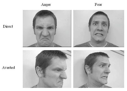 Figure 1: Anger/Fear